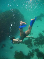 shinfin snorkeling fins: Environmentally sensitive snorkel gear